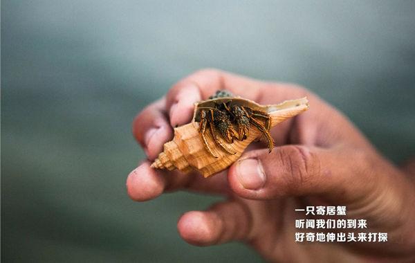 森林城市海草保育区抓到的寄居蟹