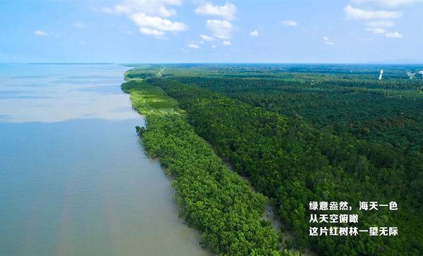 森林城市携手国际狮子会打造的红树林