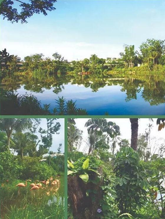 森林城市湿地公园