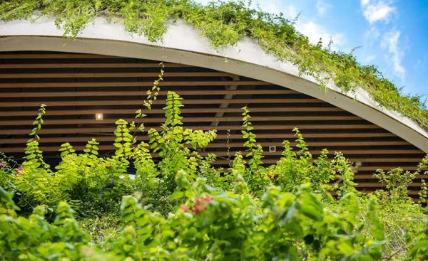 森林城市采用滴灌灌溉方式