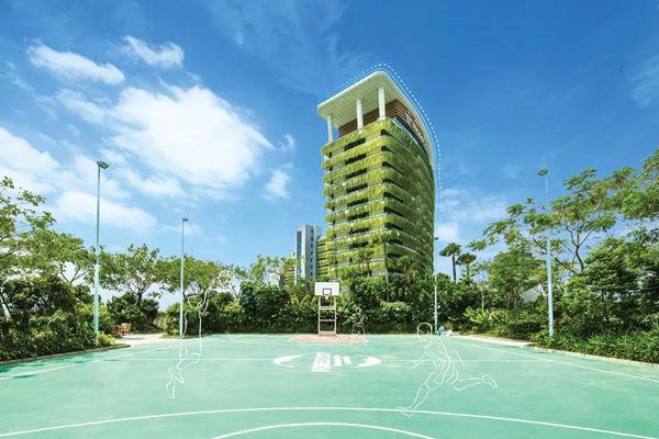 森林城市户外篮球场
